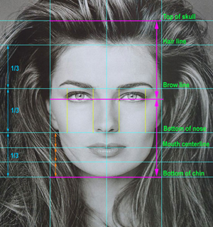 Facial Proportions - image