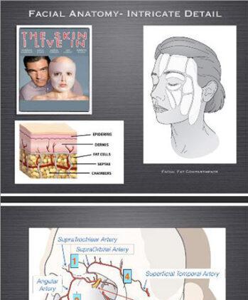 Facial Anatomy - Intricate Detail